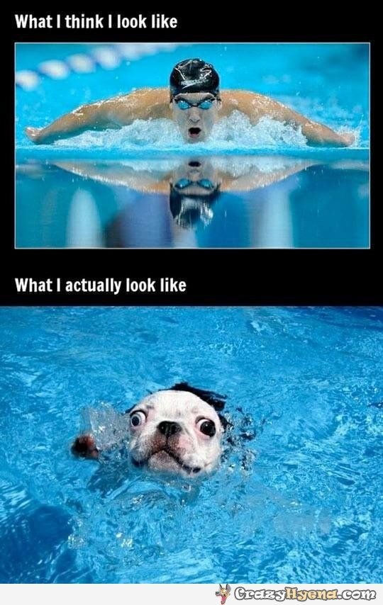 funny swimming quotes