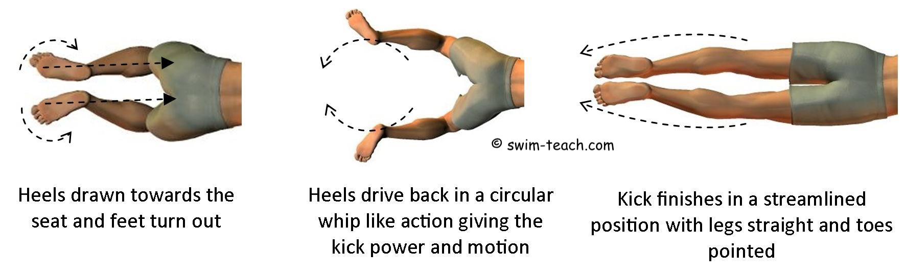 Breaststroke leg kick action showing circular whip kick