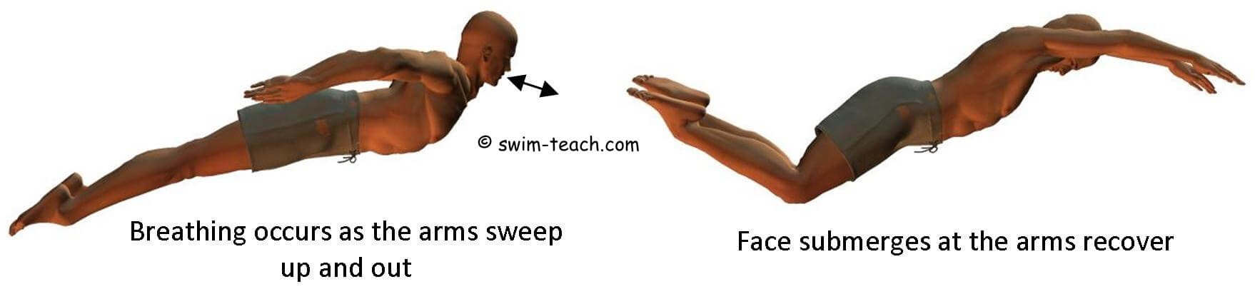 Master butterfly breathing technique