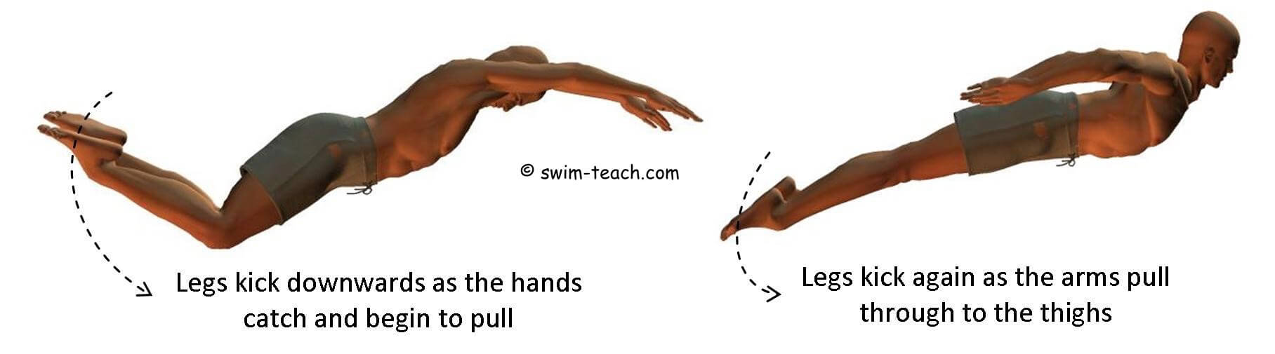 Butterfly stroke timing and coordination
