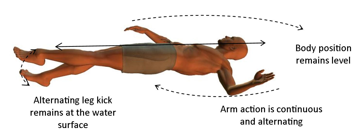 Backstroke technique for beginner swimmers