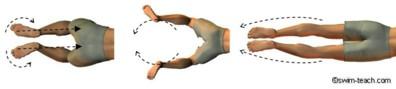 Overhead view of breaststroke leg kick technique.