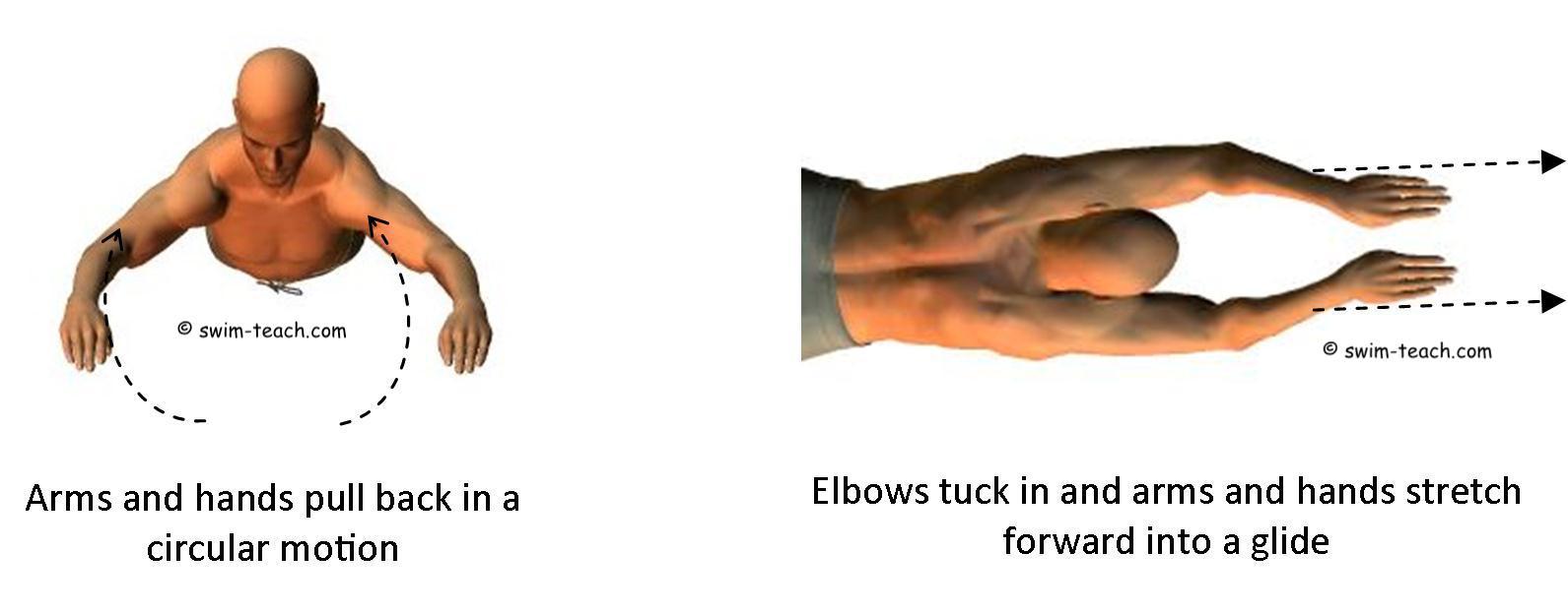 Basic breaststroke arm technique