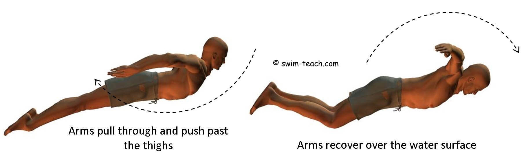 butterfly swimming arm technique for beginners