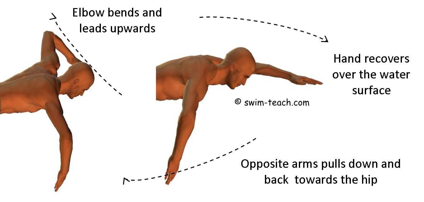 Front crawl arm action showing pull, elbow bend and recovery.