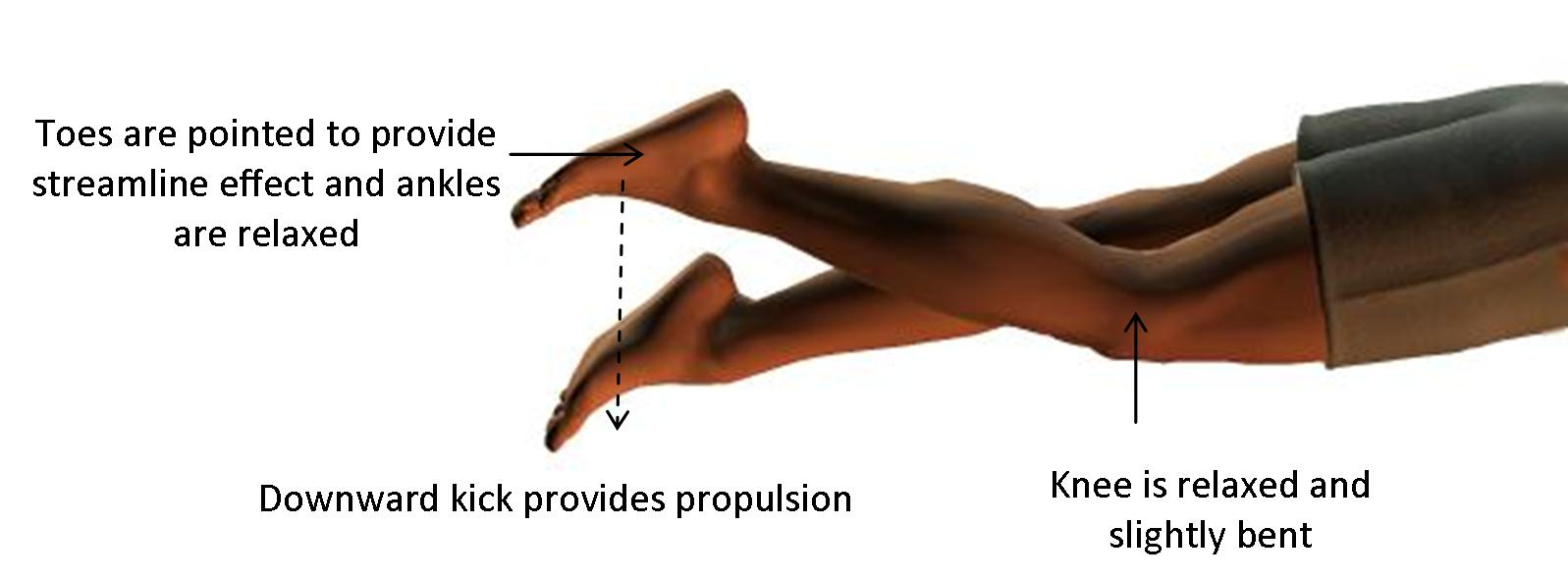 Downward front crawl leg kick gives propulsion as knee is relaxed and slightly bent